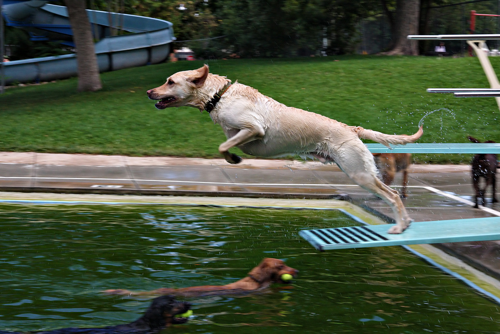 Dogs and Chlorine Pools