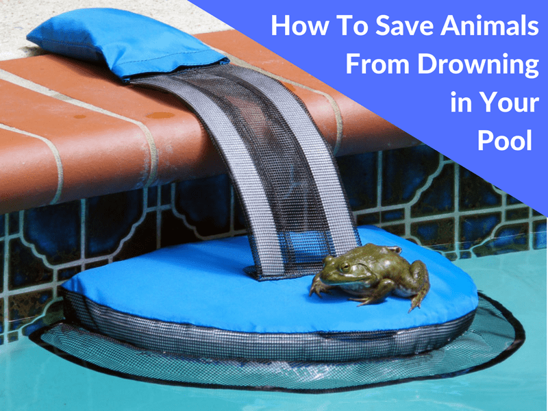 Save Animals from Drowning in Swimming Pool