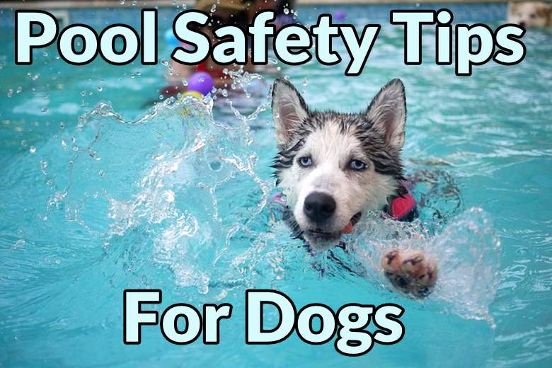 Featured image for pool safety tips for dogs