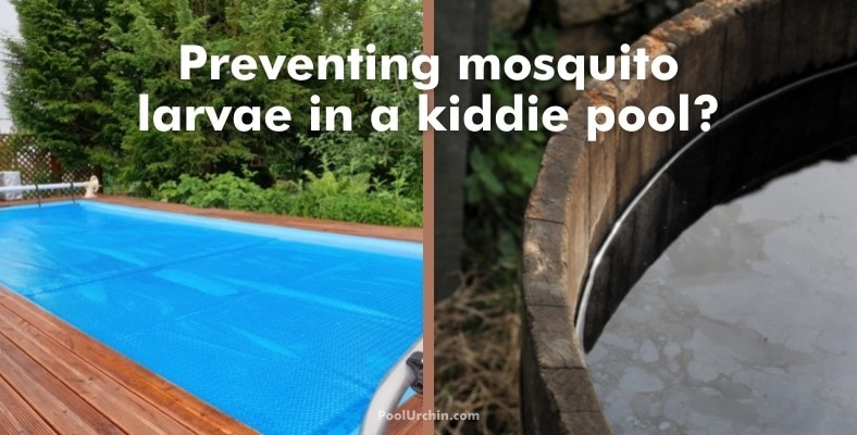 preventing mosquito larvae in a kiddie pool