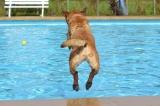 Dog Hair in the Pool – Help!